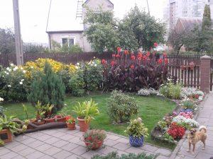 Kwiaty to pasja Krystyny, sadzi je obok swego domu Fot. z albumu rodzinnego