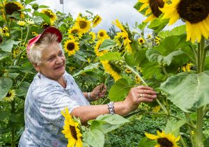 Ogród Jadwigi Kazakiewicz tonie w kwiatach i kwitnących słonecznikach Fot. Marian Paluszkiewicz