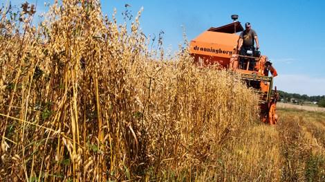 Szacuje się, że we wrześniu od rolników skupiono prawie milion ton zboża Fot. Marian Paluszkiewicz