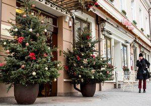 Najwcześniej drzewka świąteczne upiększają firmy, hotele, sklepy i różne instytucje Fot. Marian Paluszkiewicz