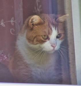 Smutny kotek.
