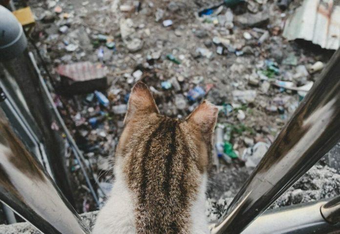 Brązowo-biały kot z obciętym uchem patrzy na ziemię pokrytą śmieciami
