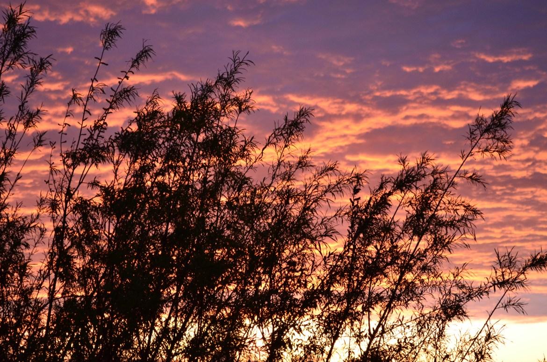 Подписчики kurilkaeao.com в Instagram запечатлели на фото  самый красочный закат этой весны