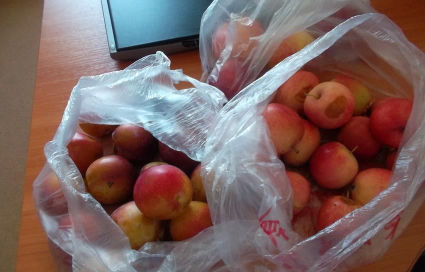Первый пошёл – в пункте пропуска «Амурзет»  в Китай вернули 12 килограммов запрещенных фруктов