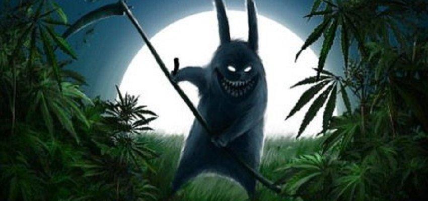 «Травник» из Песчаного увидел в лесу два куста конопли, не выдержал и приготовил из них «веселящий табачный микс»