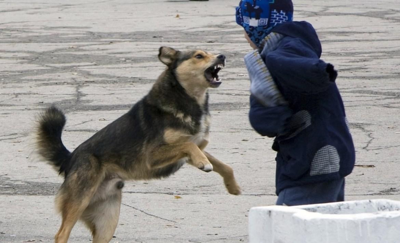В Смидовичском районе ЕАО бродячие собаки нападают на людей