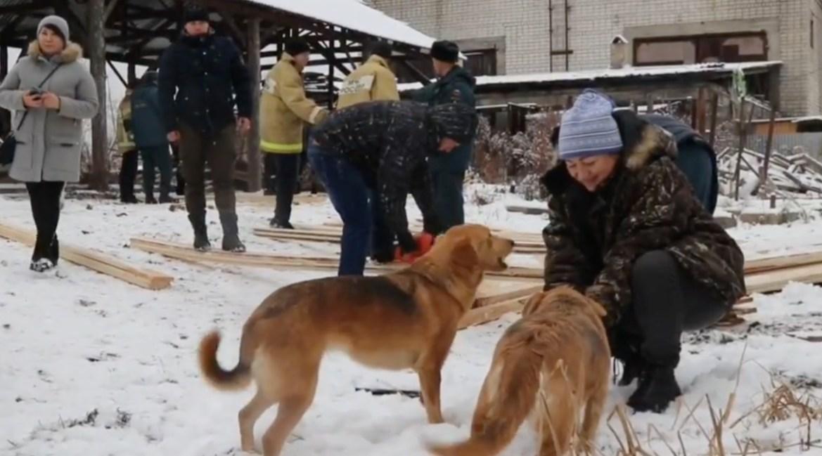 Сотрудники областного главка МЧС построили теплый вольер и будку-термос для бездомных собак (ВИДЕО)