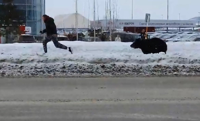 В Нижневартовске медведь вырвался из клетки и отправился на променад по улицам (ВИДЕО)