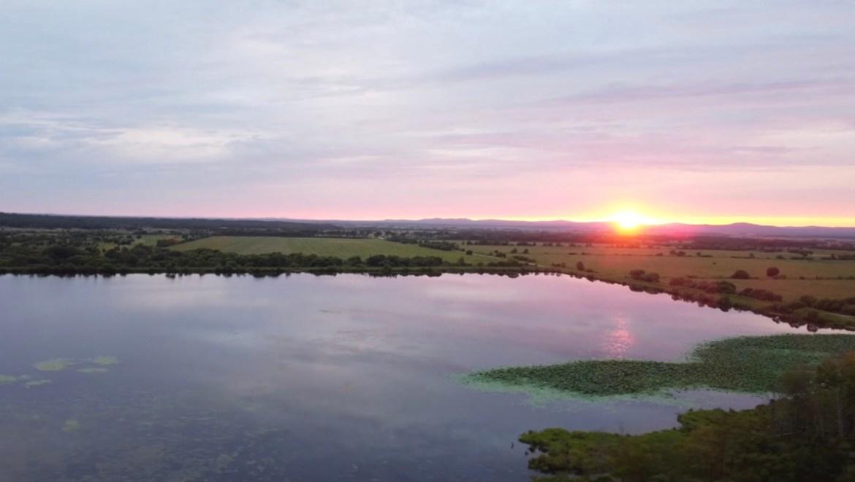 Где увидеть цветущие лотосы Комарова в ЕАО? + ВИДЕО, от которого захватывает дух