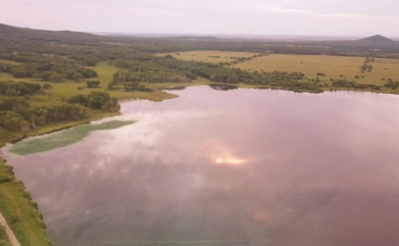 Эколог Тамара Рубцова рассказала, кого нужно благодарить за лотосы Комарова на водохранилище у Бирофельда