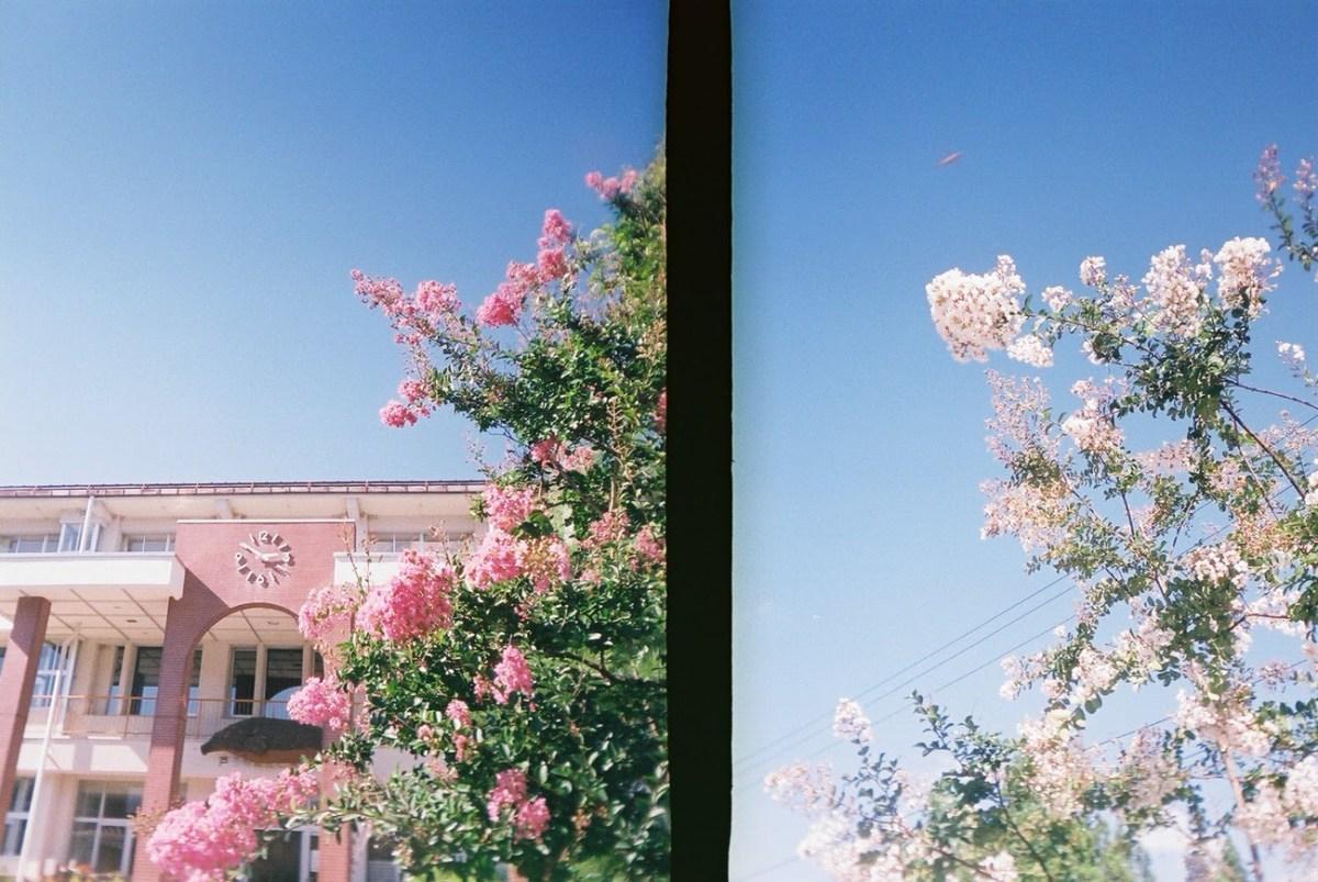 写ルンですみたいに手軽に撮れるのハーフカメラ「ゴールデンハーフ」の良いところ