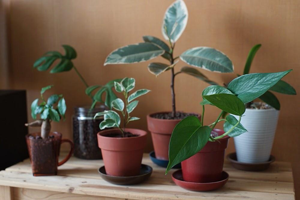 観葉植物コーナー