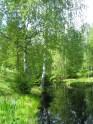 Peuranjoki 1