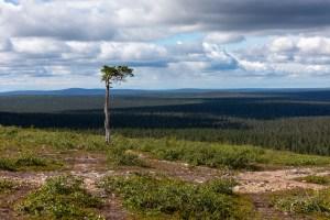 Matkalla Kiilopään huipulle. Perheen omia menoja Kiilopään polkujuoksuviikolla.