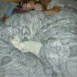 Katze im Bett