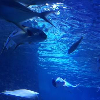 Meeres-Zentrum Fehmarn