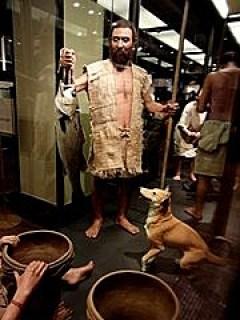 柴犬 歴史
