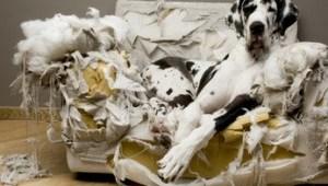 犬 問題行動