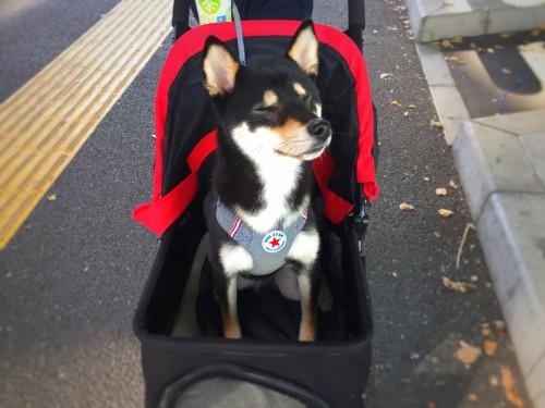 ペット・犬の全国イベント情報|2019年度版〜3月20日更新〜