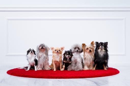 2019年度・人気の犬の種類 犬種ランキング【小型犬 中型犬 大型犬】