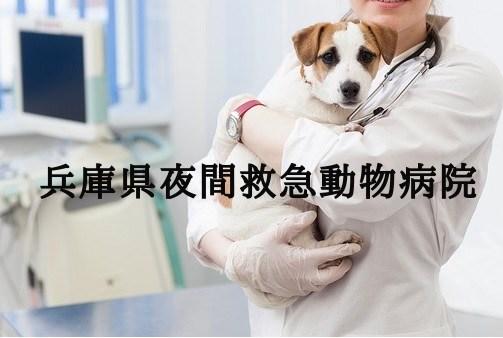 兵庫 夜間動物病院