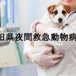 夜間救急動物病院