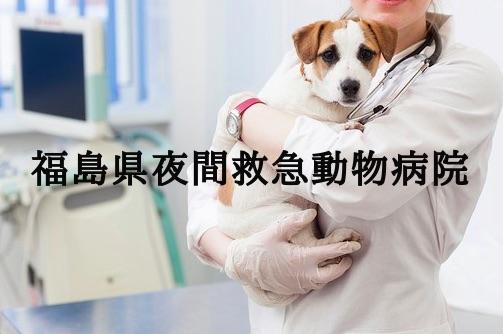 福島 夜間動物病院