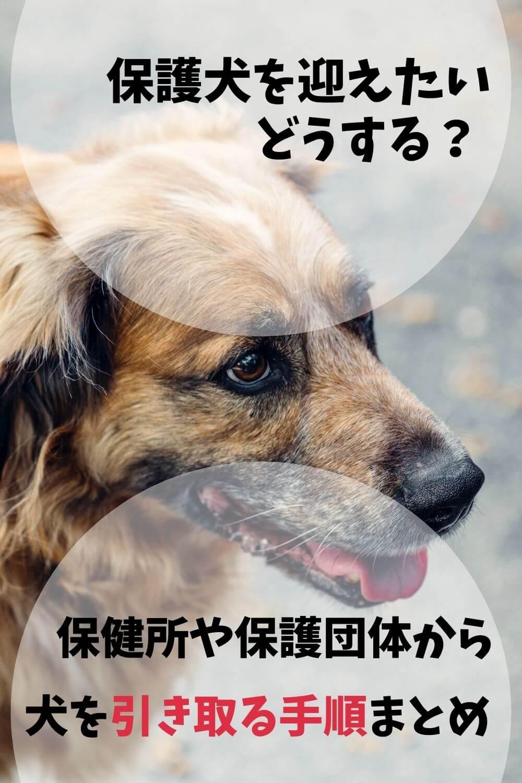 保健所と保護犬
