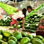 Cambodian Snap 1