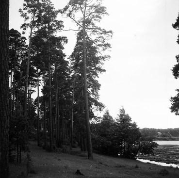 1960 (4)