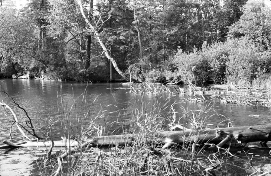 1963_07_cicha_rzeczka_dlugie (15)