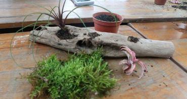 宜蘭景點  蘭城花事休閒農場 在地植物生態導覽與小農農法 漂流木DIY體驗絕佳裝飾品