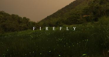螢火蟲秘境 南投蓮華池 滿天飛舞的綠色小精靈