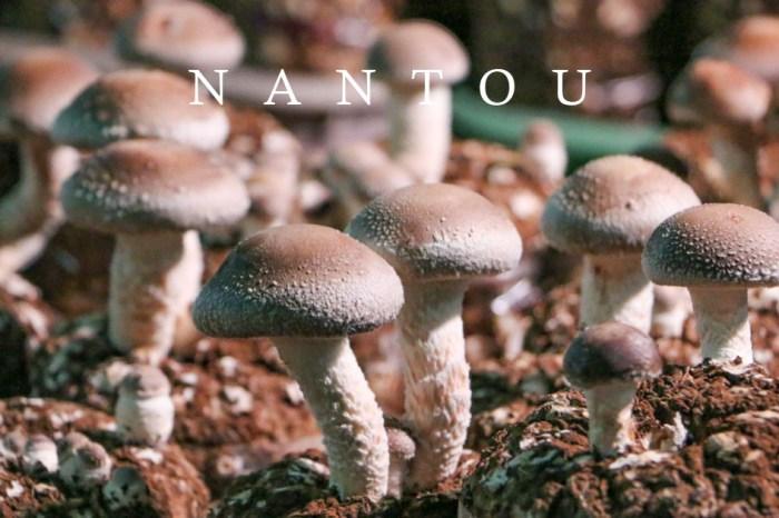 南投景點 出門採香菇去 友善環境維護生態的茂松香菇園