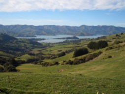 Immersed by the view on the way to Akaroa, in Christchurch, New Zealand.