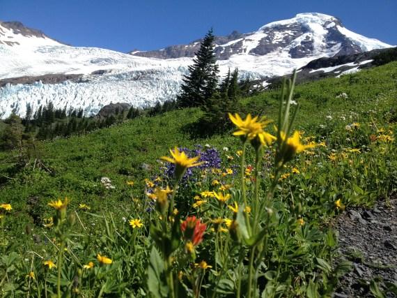 Alpine flowers on Heliotrope Ridge, Mount Baker