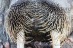 50 photographic safaris, 50 safaris, ice, Svalbard, kurt jay bertels, landing, photo lessons, photo safari, photo tour, photo workshop, photographic safari, photographic tour, safari, wildlife, wildlife photographic safari, wildlife photography, summer, images, arctic, walrus, large, huge, tusks, swimming, fighting, polar bear