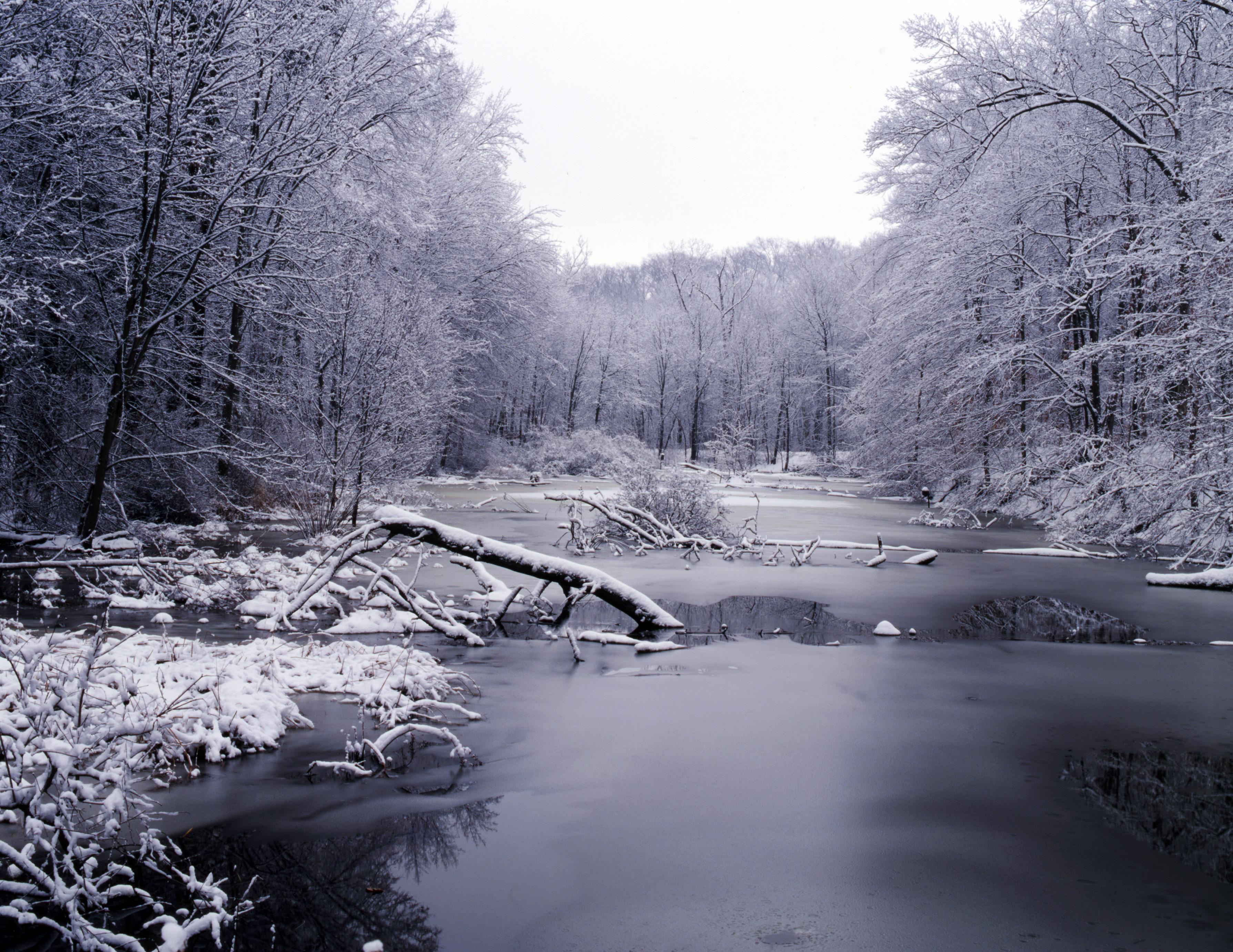 Photography Of Kurt Shaffer Photographs Christmas And