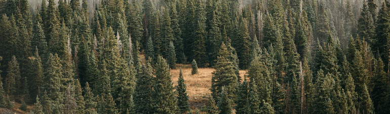 header_forestfortrees