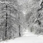 Benda yang Wajib Dibawa Saat Liburan Musim Salju