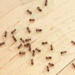 Cara Mudah Usir Serangga di Rumah