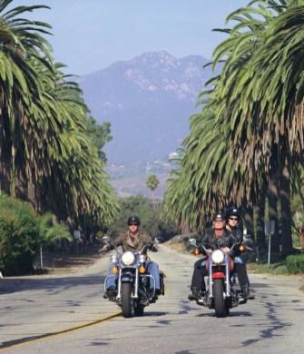 LA Harley palms