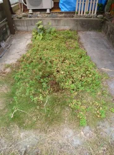 ガレージ内の雑草除去 寝屋川市 トリプルエス