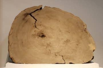 杉の年輪から紀元前660年頃の巨大太陽フレアを解明