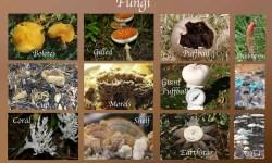 Morfologi Cendawan – Struktur dan Modifikasi Hifa