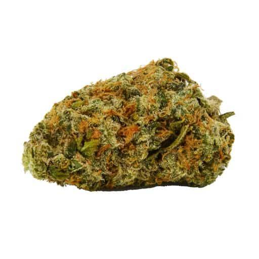 Cinderella Jack Marijuana Strain