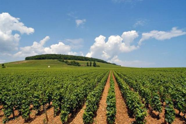 الجزيرة تستهدف زراعة 125 ألف شتلة مثمرة