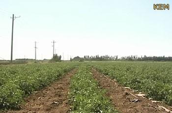 30 ألف فدان للإستثمار الزراعي التركي بولاية سنار