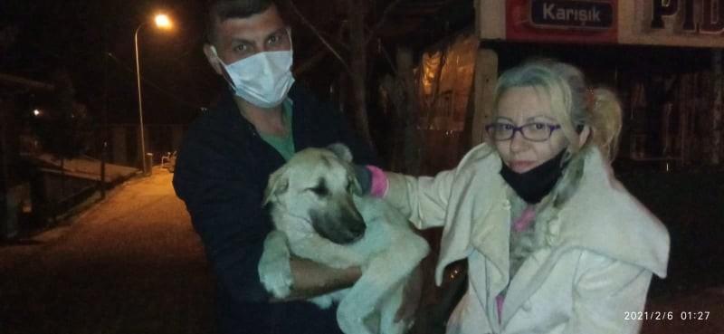 Yaralı köpekler özel izinle İstanbul'a tedavi için götürüldü
