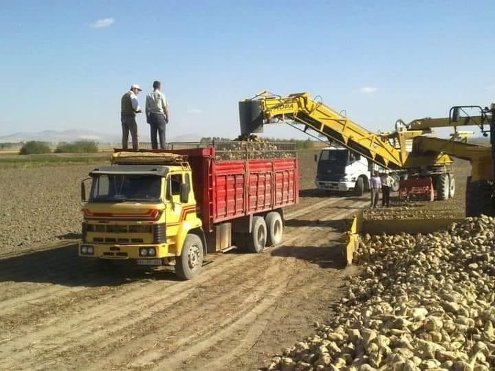 Altıntaş'ta hedef 200 bin ton pancar üretimi